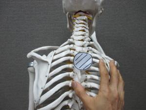 肋骨の整体