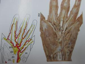 指のしびれ(4)