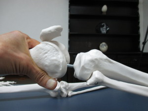 膝の骨の操法