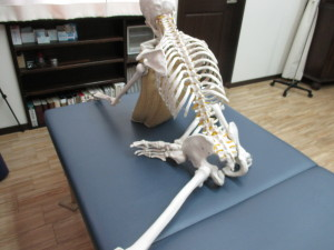 腰痛と股関節(2)