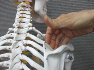 首の付け根の痛み(2)