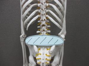 慢性腰痛(1)