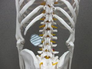 ぎっくり腰の原因(3)