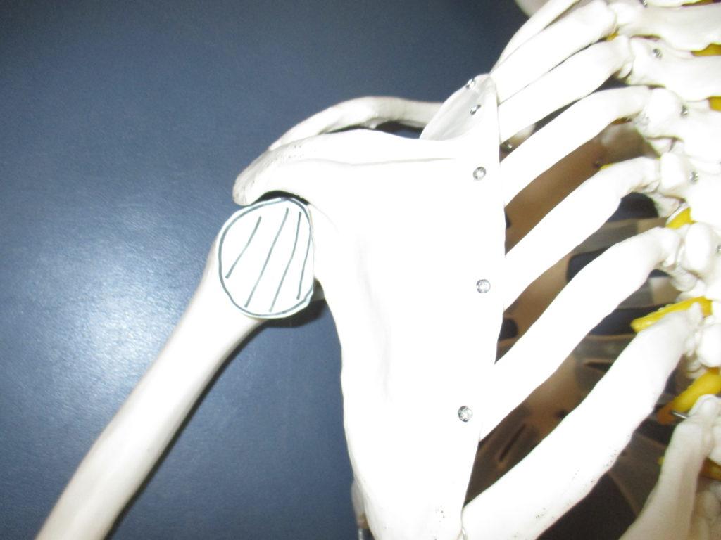 結帯動作だけができない四十肩・五十肩