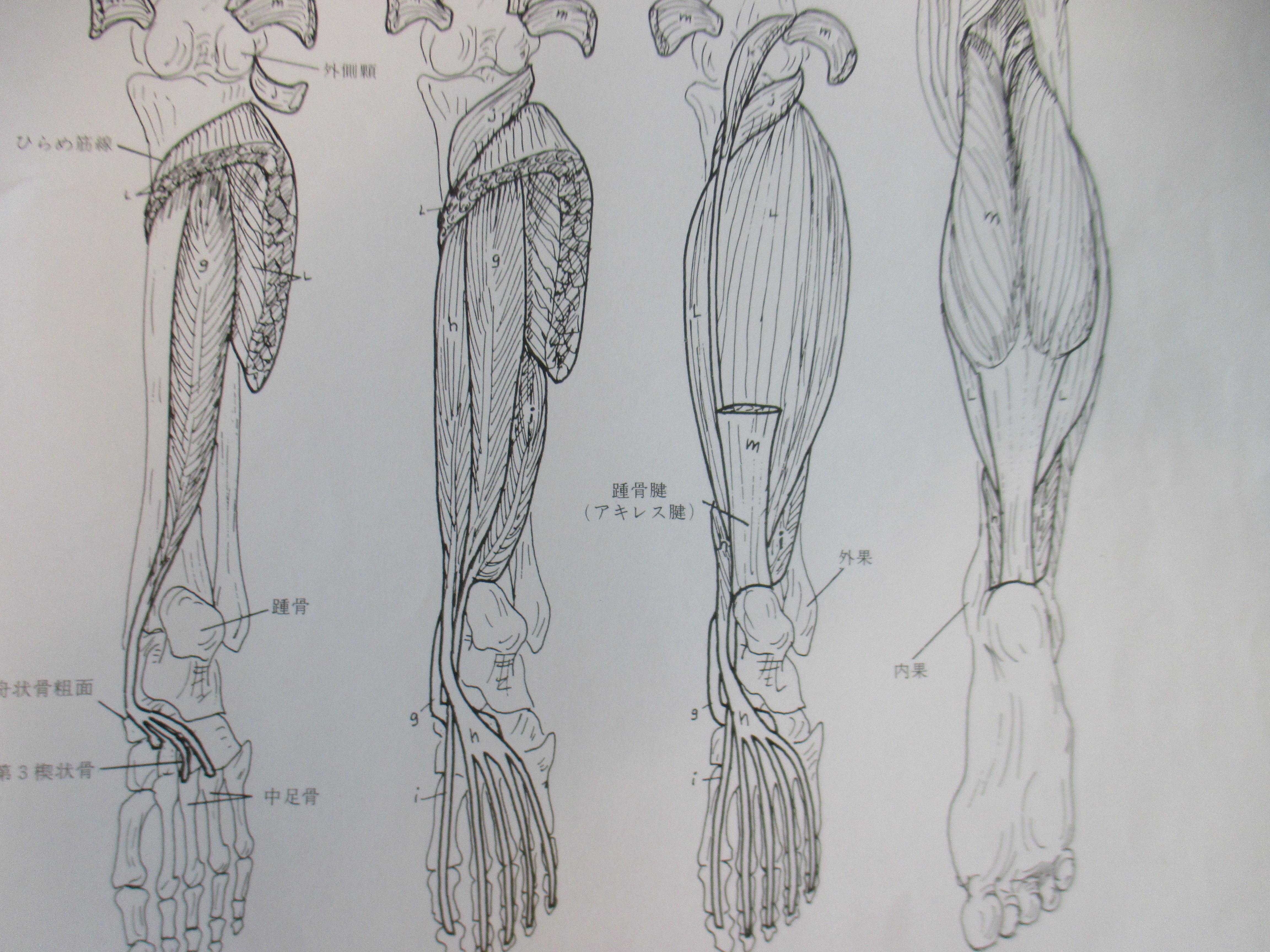 ふくらはぎの筋肉のコリが原因の腰痛